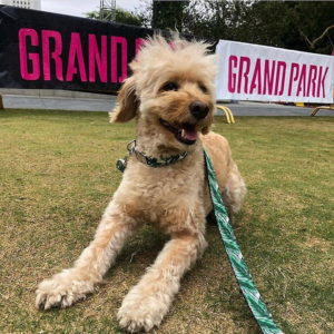 Grand Park Dog Park near THEA apartments in downtown Los Angeles