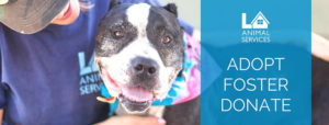 LA Animal Service pet adoption near THEA apartments in downtown Los Angeles